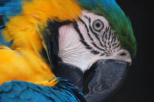 Blue and Yellow Macaw by daniellepowell82