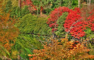 Rhododrendron Gardens by daniellepowell82