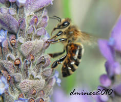 Bee Macro by daniellepowell82