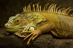 The Lizard King by daniellepowell82