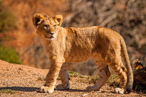 Lion Cub 4 by daniellepowell82