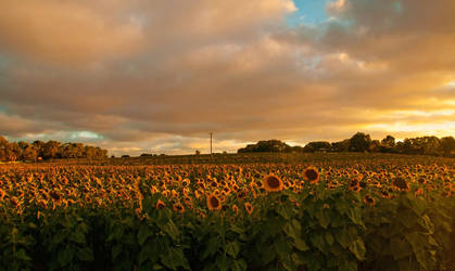 Sunflowers and Sunsets by daniellepowell82