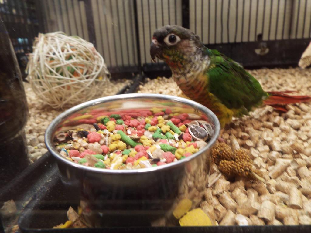 Petsmart Parrot Being All Cute By Krazykari On Deviantart