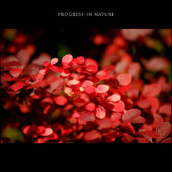Progress-in Nature XII by GregorKerle
