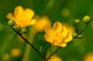 Spring-ing 034 by GregorKerle