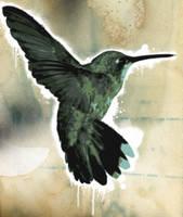 Hummingbird by apheix