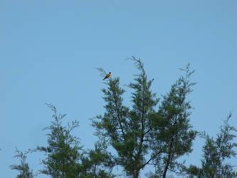 Yellow Bird by Ablebaker