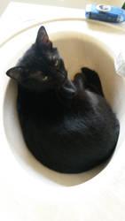Kitten Sink by Ablebaker