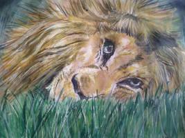 Lion by vinigal123