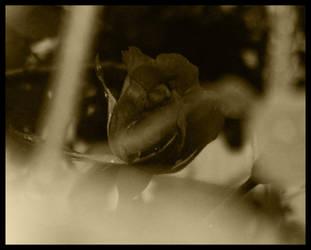 Old Flower 4 by Kitadashi