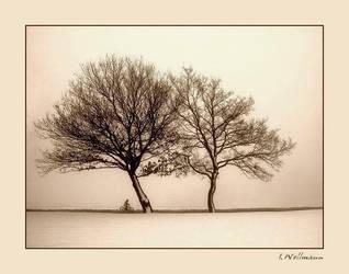 Foggy day by photoarts