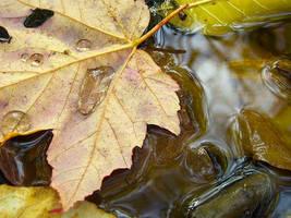 Fall by dorkfish03x04