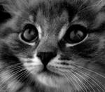 Cat- by dorkfish03x04