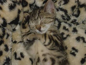Camo Kitten by silentivy