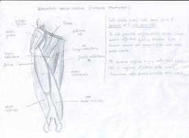 Anatomy Study - 2 by CharlieFleed