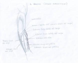 Anatomy Study - 3 by CharlieFleed