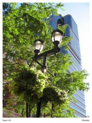 Streetlamp - Philadelphia by CharlieFleed