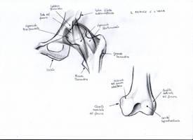 Anatomy Study - 8 by CharlieFleed
