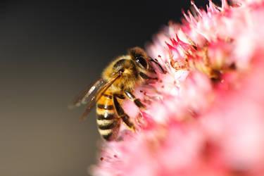 Bee II by pilwe