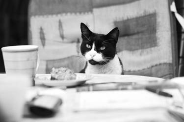 Cat B n W by pilwe