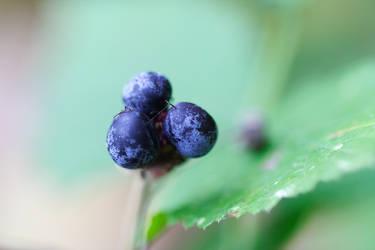 Blue by pilwe