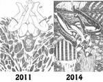 Evolution art by LCFreitas