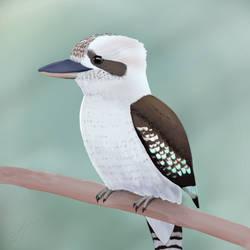 Kookaburra by ScienceWithSteve