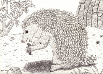 Hedgehog by kyrtuck