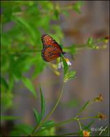 Butterfly by WALKING-GIRL