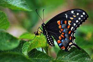 Butterfly 3 by WALKING-GIRL