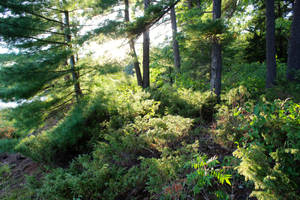 through the moose trails by minamiko
