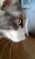 ms kitty by minamiko