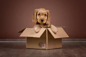 Get a puppy! by zoldszorny