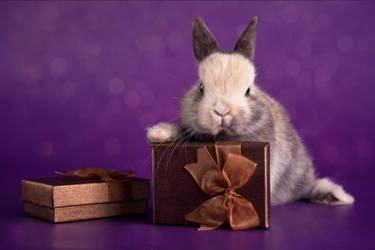 Christmas bunny II by zoldszorny