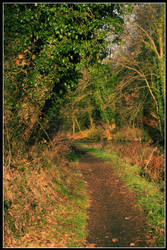Autumn in Wolverhampton - II by jerry486