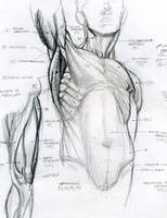 anatomy by Tolomuco