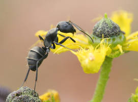 Little big ant by AnjaSchlegelmilch