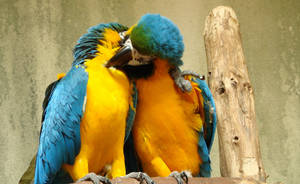 Love Birds by roamingtigress