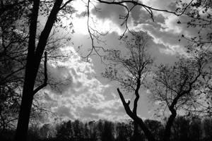 Cloud Trees by roamingtigress