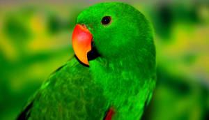 Green by roamingtigress