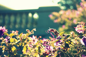Garden of Dreams by roamingtigress