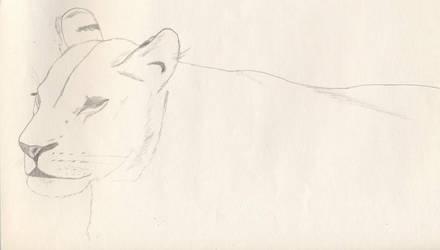 Lioness Sketch by Okibi-Kris