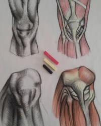 Anatomy_study_JAM by Jamesonarts