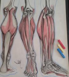 Anatomy_study02_JAM by Jamesonarts
