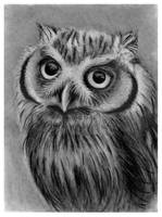 owl by szog88