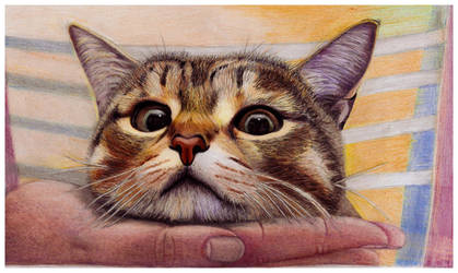 Hypno cat by szog88