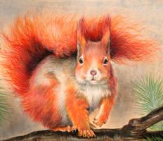 Squirrel by SashaSempe
