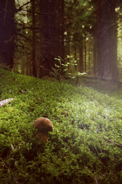 Mushroom the second by ppan09