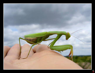 Mantis in my hand by keitaseb