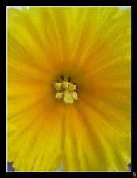 Golden flower by keitaseb